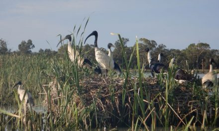 Kings Billabong – Kayaking in Mildura