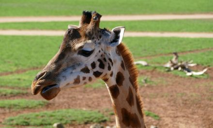 Monarto Zoo Adelaide
