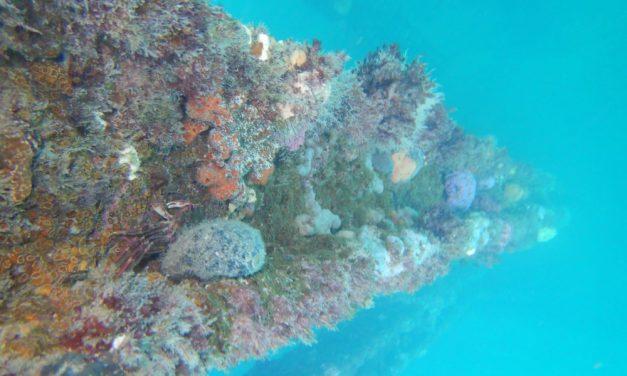 Snorkel at Rapid Bay South Australia