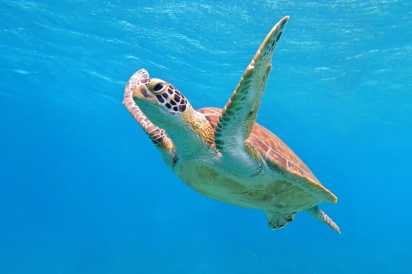 queensland snorkeling