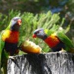 The Best Australian Wildlife Experiences in Queensland