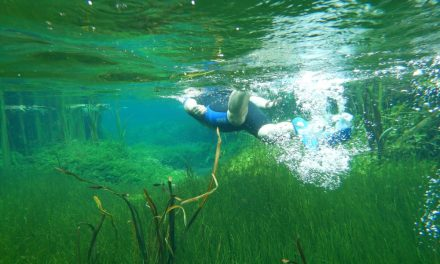 Best spots to snorkel in Adelaide & South Australia