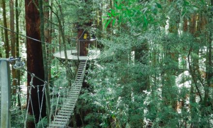 The Otway Fly & Treetop Walk