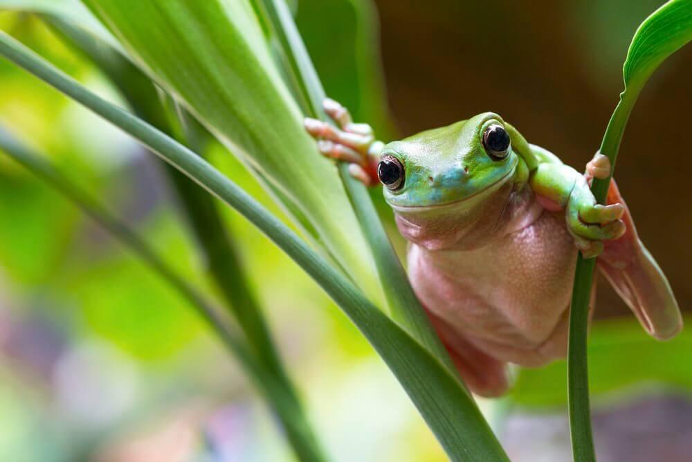 Tamborine Mountain frog hollow