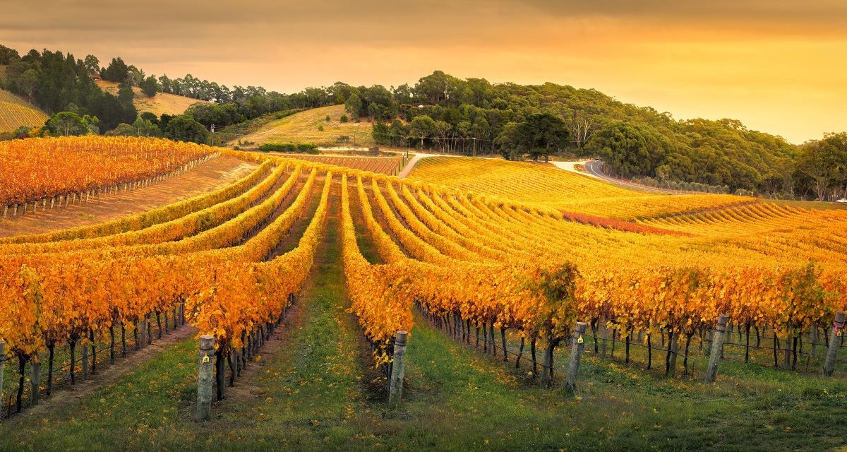 12 of the Best Day Trips from Adelaide
