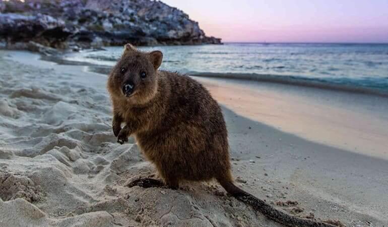 Perth Day Trips Rottnest Island