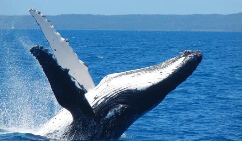 Brisbane Day Trips - Whale watching on the Sunshine Coast