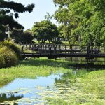Relax at the Gold Coast Botanic Gardens