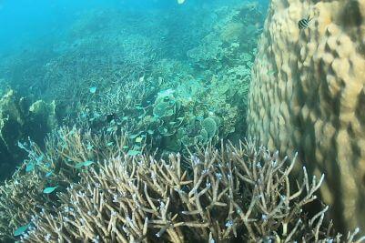 Snorkel Western Australia