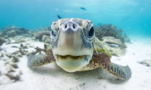 Coral Bay Snorkelling Guide