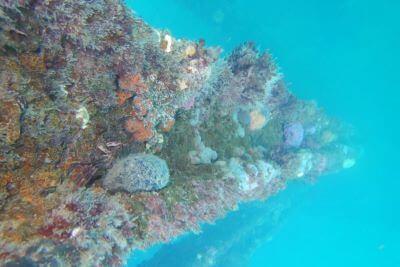 South Australia Snorkelling