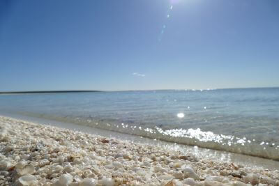 Shark Bay Shell Beach