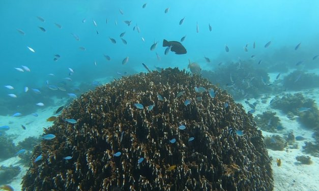 Exmouth Snorkelling Guide – Snorkel Ningaloo Reef